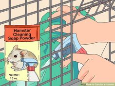 Veterinarian-Approved Advice on How to Care for a Hamster Guinea Pig Toys, Guinea Pig Care, Guinea Pigs, Humane Society, Bearded Dragon Vivarium, Hamster Names, Hamster Habitat, My Dad Says, Sleeping All Day