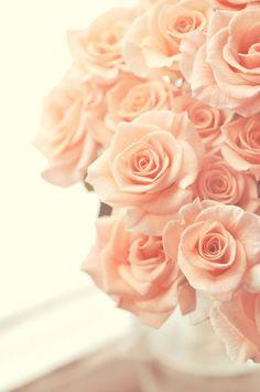 peach roses ✿⊱╮