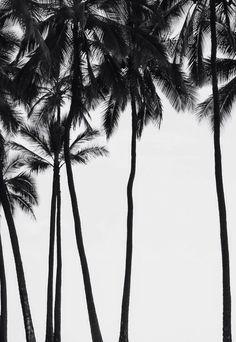 Мои закладки illustrations fotografia blanco y negro, palmeras и fotos blan Mode Poster, Palmiers, Jolie Photo, Black N White, Pretty Black, Of Wallpaper, Summer Wallpaper, Black And White Photography, Palm Trees