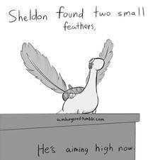 Sheldon is a bird now....