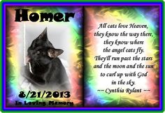 #OTRB #RainbbowBridge @HomerBlindCat  (Memorial #3) xoxo