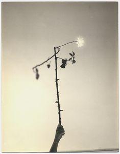 Masao Yamamoto, 'Untitled #545 (from A Box of Ku),' , Yancey Richardson Gallery