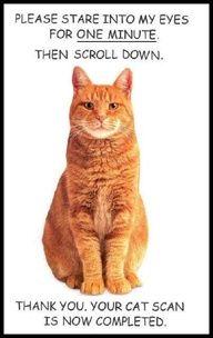 Cat humor! http://es.tidebuy.com/producto/Dividir-capa-encapuchada-Conjunto-de-punto-9631963.html