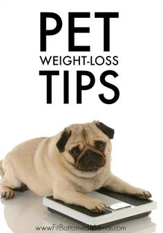 Has fido put on a few pounds? These tips can help get your pup healthier!