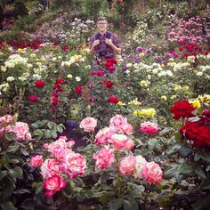 Portland, Oregon Rose Garden