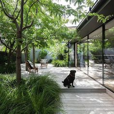 Elwood House, This house is all about the gardens! Tall steel doors mirror the greenery and imbue the house into its established… Deck Around Trees, Courtyard Pool, Garden Architecture, Lush Green, Interior Exterior, Outdoor Areas, Dream Garden, Garden Inspiration, Landscape Design