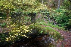 Reelig Glen #Scotland www.havenhouseart.com