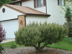 pine bush - Google Search
