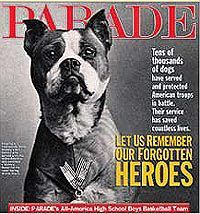 STUBBY, Pit Bull Terrier mix, WWI. The most decorated war dog in U.S. history.