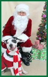 Aonghus P. McGillicuddy the 1st is an adoptable Pit Bull Terrier Dog in St. Paul, MN. You can fill out an adoption application online on our official website. Aonghus P. McGillicuddy the 1st Aonghus i...