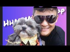 Fun Run and Photomarathon with Lexus The ShihTzu - YouTube Marathon, Mens Sunglasses, Running, Pets, Youtube, Fun, Pictures, Photos, Marathons