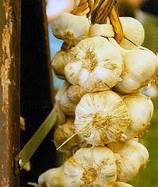 Traditii de Sfantul Andrei | Mireasa Buclucasa Garlic