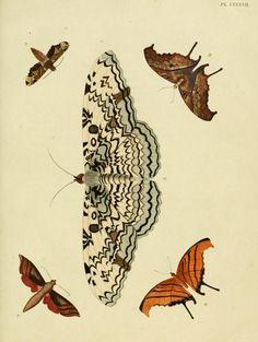 d. 1 (1779) - Aanhangsel van het werk, De uitlandsche kapellen : - Biodiversity Heritage Library