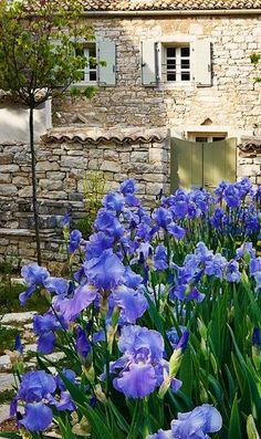 Stone masonry and blue iris at an estate, Corfu, Greece. Iris Flowers, Blue Flowers, Planting Flowers, Beautiful Gardens, Beautiful Flowers, Jardin Decor, Iris Garden, Bearded Iris, Arte Floral