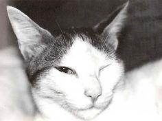 ilove.cat    http://ilove.cat/   http://www.amazon.co.jp/dp/4898153496/ref=cm_sw_r_tw_dp_R07Gqb0C1K0QT