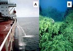 Aliens attack: Predicting the spread of marine invasive species