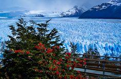 An image portraying the boardwalk by the infinite ice of the Perito Moreno Glacier