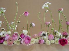 flower | ranunculus, mums, etc. | Pindex.jp