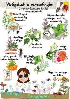 Veggie Gardens Virágokat is a veteménybe - miért? Home Vegetable Garden, Herb Garden, Veggie Gardens, Organic Gardening, Gardening Tips, Types Of Herbs, Dogwood Trees, Climbing Vines, Companion Planting
