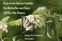 Life war and nature
