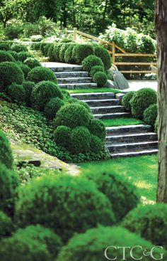 As a way to enliven the shady ground, James Doyle played with green tonalities, planting low irregular-sized boxwood balls beside beds of shiny-leaved Pachysandra terminalis and Vinca minor. Boxwood Landscaping, Boxwood Garden, Hillside Landscaping, Topiary Garden, Landscaping Ideas, Sloped Backyard, Sloped Garden, Hillside Garden, Terrace Garden