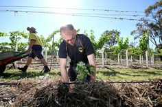 LET IT GROW: University of Southern Queensland Chancellor John Dornbusch at the vine planting at the Queensland College of Wine Tourism on Tuesday morning.