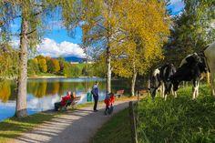 Urlaub in Saalfelden Leogang, ein traumhafter Spaziergang am Ritzensee Mountains, Nature, Travel, Vacation, Naturaleza, Viajes, Destinations, Traveling, Trips