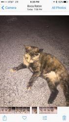 Lost and Found Pets near Plantation, FL 33324