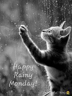 One Joyful Thing Joyful Things Rainy Sunday, Rainy Days, Good Afternoon, Good Morning, Happy Monday Quotes, Manic Monday, Online Friends, Sunday Funday, Cat Lovers