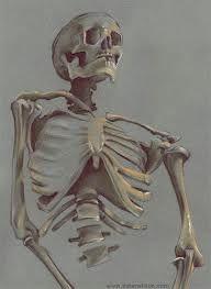 skeleton drawings - Google Search