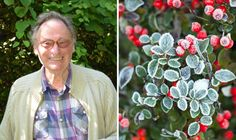 Article: NEW COURSE MYGARDENSCHOOL Winter is the ideal time to rethink some of the key areas of your garden according to John Brookes MBE, one of Britain's most influential designers. Gardening Courses, Gardening Tips, Lost Garden, Gardening Gloves, Raised Garden Beds, Raised Beds, Garden Boxes, Garden Gifts, Winter Garden