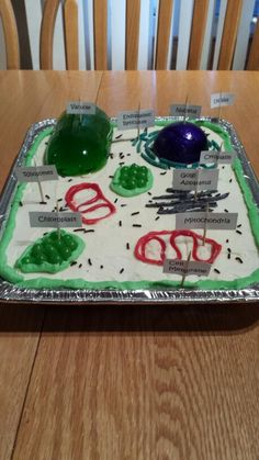 Plant cell cake a pinterest plant cell plants and cake 3d plant cell model using jello styrofoam jelly beans candy icing publicscrutiny Images