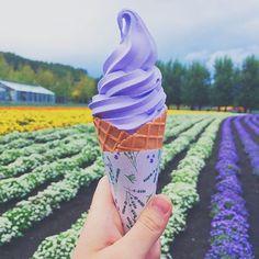 Farm Tomita: Hokkaido, Japan