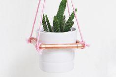 Cactusplanterdiy 3