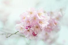 Delicate Spring by Jacky Parker