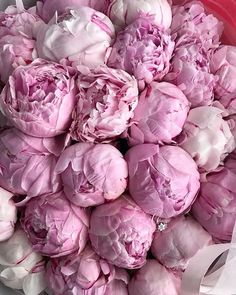 Rainbow Aesthetic, Flower Aesthetic, Flowers Nature, Faux Flowers, Amazing Flowers, Beautiful Flowers, Peony Sarah Bernhardt, Painting The Roses Red, Stay Wild Moon Child