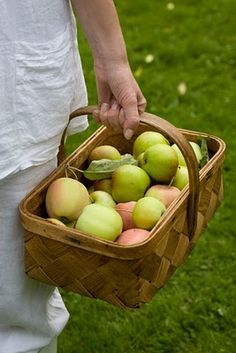 One more basket of freshly picked apples. I hope I didn't pick too many, but there are so many things you can do with apples.......... Eat them fresh from the tree!