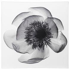 цветок рентген - Поиск в Google