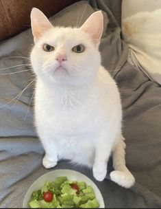 """Michael's Cat on Twitter: """"This cat hates salad (and possibly Mondays)… """" Photo Chat, Enjoy Your Weekend, Rabbit Food, Cat Memes, Cats Of Instagram, Cute Cats, Cat Lovers, Cute Animals, Funny Animals"""