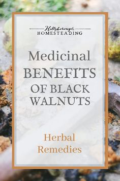Black walnut trees can provide many uses to a homestead: they feed wildlife, are a source of valuable lumbar, food and medicine. For more info on the medicinal and health benefits of black walnuts, click the pin! Turmeric Extract, Turmeric Tea, Herbal Remedies, Home Remedies, Natural Remedies, Health Benefits Of Walnuts, Health And Wellness, Health Tips, Black Walnut Tree