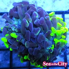 Aquascaping, Reef Tanks, Live Coral, Salt And Water, Fish Tank, Sea, City, Plants, Aquariums