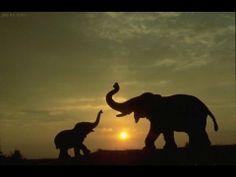 Destinos In Sudafrica / Bloque 4 Wild On / Produccion Bebo Bianchi (+lis...