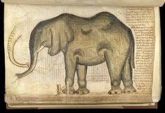 From the Medieval Manuscripts blog post 'The Elephant at the Tower'. Image: The #elephant at the #TowerofLondon (London, British Library, MS Cotton Nero D I. f. 169v).