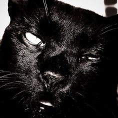 "@shoji_ogawa_unlimited's photo: ""#釜ヶ崎 ##kamagasaki #cat"""