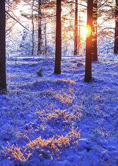 Sun through the tree's.