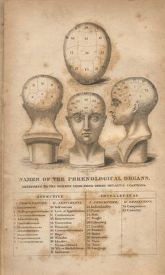 phrenology | Old Phrenology Copper Plate Engraving – Late 19th Century