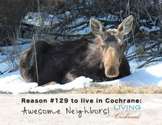 Reasons to live in Cochrane!