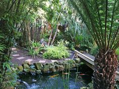 Object Architecture - London's Bespoke Crafted Architecture - Nigel Buckie - Landscaping - Tropical Garden - London, UK Tropical Garden, Bespoke, Landscaping, London, Architecture, Plants, Taylormade, Arquitetura, Tropical Gardens