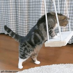 Maru the Cat vs. Swing | Gif Finder – Find and Share funny animated gifs