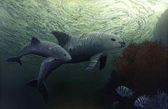 """Delfines """"pastorearán"""" a vaquitas marinas a un refugio en el Golfo de California"""